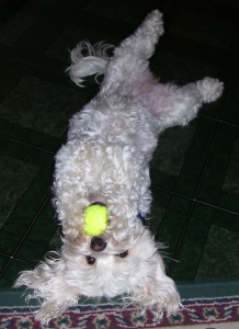 upsidedown with ball