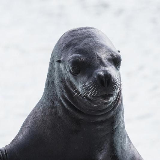 sea lion (800x533)
