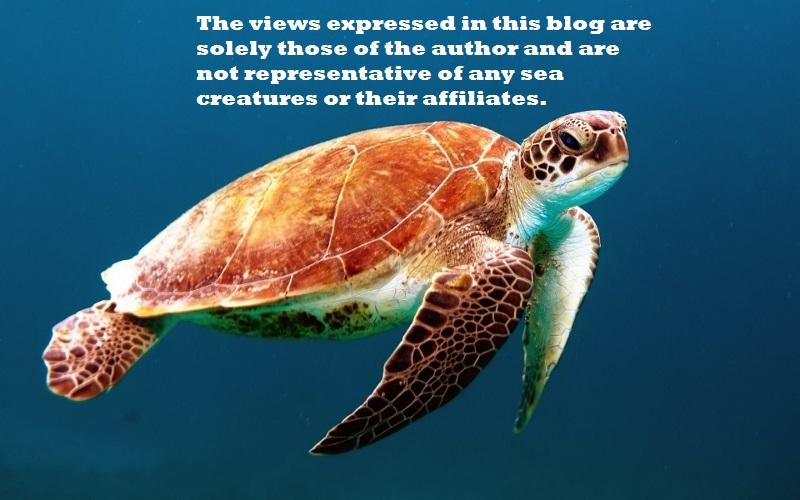 turtle (800x500)
