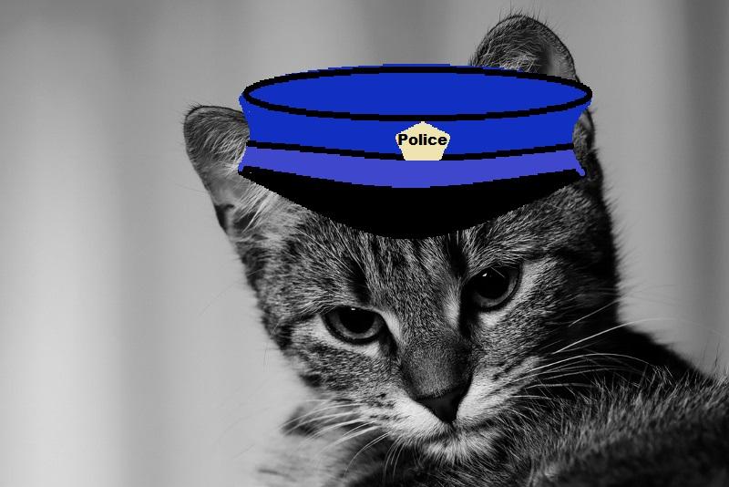 kitten (800x534)