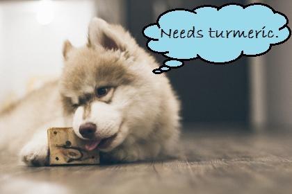 dog eating block