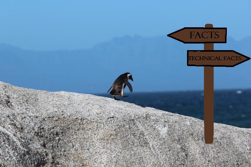penguin (800x533)
